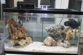 Decorator Crabs Reef Safe by 10g Symbiotic Slowly Becoming A Reef Aquarium Journals Nano