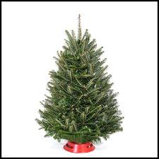 Our Table Top Christmas Trees Come With Their Own Stand And Range In Size From 2 4 Feet