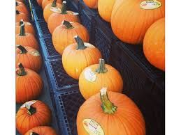 Northern Illinois Pumpkin Patches by Pumpkin Patches Corn Mazes Fall Festivals In The Burr Ridge Area