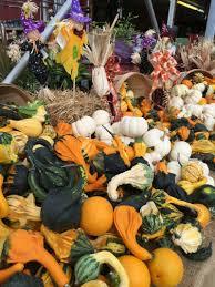 Pumpkin Farm Clarence Ny by Badding Bros Farm Market And Garden Center Home