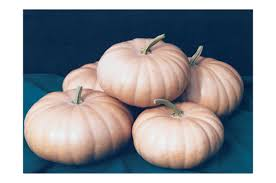 Natural Fertilizer For Pumpkins by Long Island Cheese Pumpkin Seed Johnny U0027s Selected Seeds