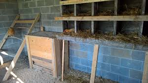 Coop Inside Barn? | BackYard Chickens Converting A Barn Stall Into Chicken Coop Shallow Creek Farm In 57 With About Our Company Kt Custom Barns Llc Question Welcome To The Homesteading Today Forum And Community Shabby Olde Potting Shed Makeover Progress Horse To Easy Maintenance Good Ideas For Any Chicken Coop Youtube The Chick Litter Sand Superstar Built House In An Empty Horse Stall Barn Shedrow Row Horizon Structures