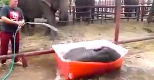 Fact Nothing Is Cuter Than A Baby Elephant Playing In Kiddie Pool Now Thats Just Too Adorable For Words The Little Cutie Youre About