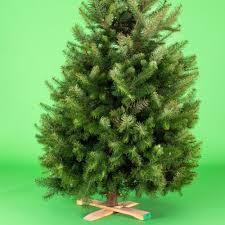 Christmas Tree Saplings For Sale by Fresh Vs Fake Christmas Tree Choosing The Right One For You Sunset
