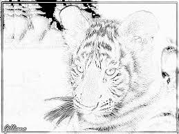 Coloriage 0487 Zoo De Beauval 2007 Copie à Imprimer Pour Les Enfants