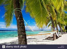 Empty hammock between palm trees on tropical beach Stock