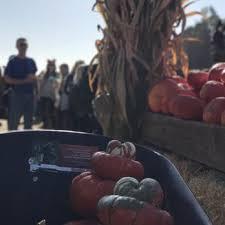 Half Moon Bay Pumpkin Patch 2017 by Arata Pumpkin Farm 221 Photos U0026 159 Reviews Christmas Trees