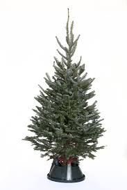 4ft Christmas Tree With Lights by Mini Real Christmas Tree Christmas Ideas