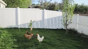 Can I Have Chickens In Greeley, Colorado? | Life Transplanet Cheap Raising Ducks For Eggs Find Deals On The Chicken Chick 11 Tips For Predatorproofing Chickens 1064 Best Images Pinterest Chickens In The South Southern Living Keeping Ultimate Beginners Guide Australian Inrested Your Backyard Home Life How To Chickenproof Garden Modern Farmer Coop Yard Design 7 Coops 6760 Homestead Critters Landscape Gardening With 343 Other Farm Eggs