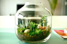 plante verte dans une chambre à coucher plante pour chambre 5 plantes dintacrieur pour daccorer la chambre
