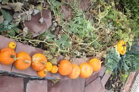 Turkey Pumpkin Push Ins by Thanksgiving Lilly U0027s Table Blog