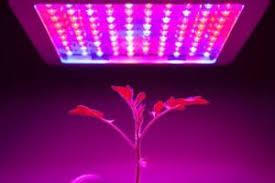 Advanced Platinum Series LED Grow Light Review