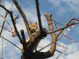 cat on file cat on the tree 3 jpg wikimedia commons