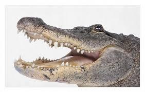 outdoorteppich dekorative polyester bodenmatte mit rutschfesten träger abakuhaus rechteckig krokodil wilder american alligator kaufen
