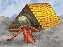 Halloween Hermit Crab Reef Safe by How To Play With Your Hermit Crab 13 Steps With Pictures