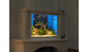 premium aquarium berlin aquarienbau aquarienpflege