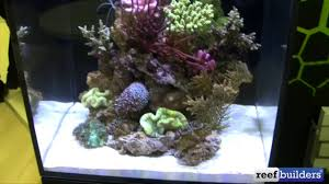 Halloween Hermit Crab Reef Safe by Red Sea Max Nano All In One Aquarium With Aquaillumination Prime