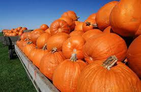 Pumpkin Patch Denver Pa by America U0027s Best Pumpkin Festivals U2013 Fodors Travel Guide