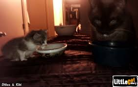 cat wont eat q a why does my cat want me to eat cat diary