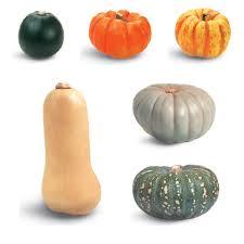 Varieties Of Pumpkins by Pumpkin