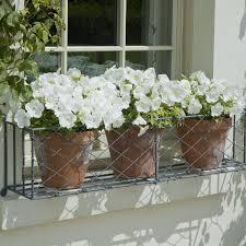 White Petunias In A Wire Window Box