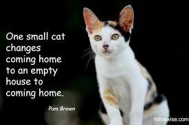 adopt a cat why adopt a cat consider adopting an cat