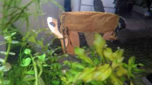 Pumpkin Seed Sunfish Pictures by Pumpkinseed Sunfish In An Aquarium Youtube