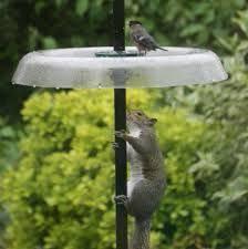 Best 25 Bird feeder poles ideas on Pinterest