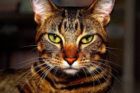 orange cat names tabby cat names cat names city