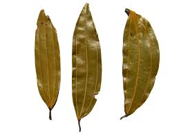 Best Christmas Tree Type by Bay Leaf Wikipedia