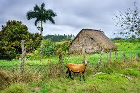 Horseback Riding Cuban Tobacco Farms In Vinales O Expert Vagabond