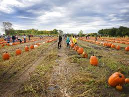 Pumpkin Patch Sioux Falls Sd by Photos Country Apple Orchard 20th Annual Harvest Fest