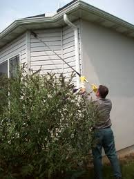 how to get rid of a yellow jacket nest tomlinson bomberger