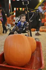 Monrovia Pumpkin Patch by Do Tell Anabel Fall Festivities With The Boo Boo