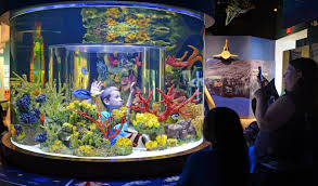 Star Wars Aquarium Decorations by South Florida Science Center To Break Ground On New Golf Course