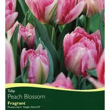bulbs tulip blossom bulbs for sale mail order