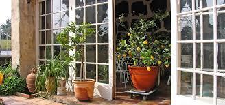 zitronenbaum überwintern das ideale winterquartier utopia de