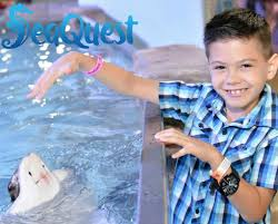 Seaquest Coupon Code Kids And Sharks A Fun Morning At Seaquest Las Vegas Vintage Blue Under The Sea Interactive Aquarium Discount Tickets New Attraction Comes To Planned For River Ridge Mall In The Salt Project Things Do Planned Aquarium Folsom Faces Community Opposition Deal Now Valid All Summer Admission Tickets Or Ultimate Experience Package Certifikid Seaquests Problems Extend Beyond Discount Opening United Moms Network Quest Coupons Mk710 Deals