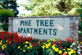 2 Bedroom Apartments Chico Ca by Pine Tree Apartments Near Csu Chico Campus In Downtown Area