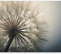murando fototapete selbstklebend blumen 49x35 cm tapete