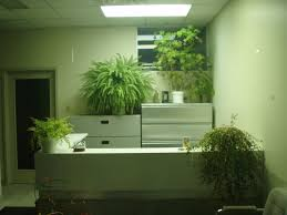 Pot Plants For The Bathroom by Reviving Overgrown Houseplants