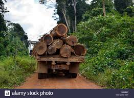 Trucks Loaded With Tree Trunks, Illegal Logging, Amazon Rainforest ... Orange Tree Wooden First Trucks Pack Of 3 At John Lewis Partners Stock Photos Images Alamy Convoy Utility And Removal On The Way North I95 Davey Removal October 13th 2013 Toronto On Youtube Pine Tree Logs Being Moved By Logging Trucks Photo 123598464 Wright Service Reaps Rewards From Long Forestry Bucket Affordable How To Ensure Efficient Vocational Truck Specifications Equipment For Sale A Better Arborist American Historical Society