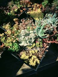 Menards Christmas Tree Stands by Succulent Plants At Menards Outdoors Pinterest Plants