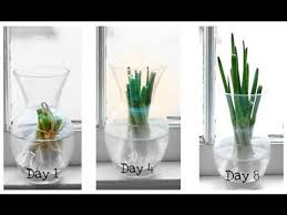 how to grow at home