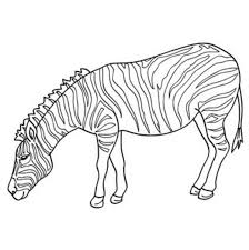Coloring Pages Of Zebras