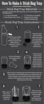 Pas Pumpkin Patch Punxsutawney by Best 25 Stink Bug Trap Ideas On Pinterest Stink Bug Repellent