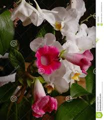 100 Blooming House Plants Spring Time Stock Image Image Of