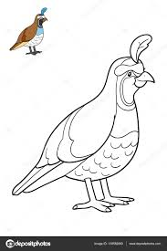 Coloring Book Quail Stock Photo 139582060