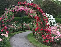 Rose Garden Design Ideas