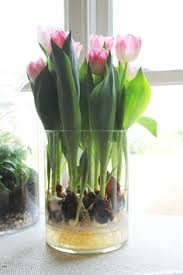 planting bulbs in a container indoor water garden flowers